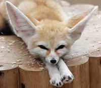 quelles oreilles!
